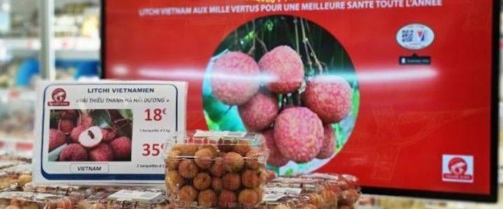 ظاهراً از Thanh Ha ، با قیمت بالاتر از 500،000 VND / کیلوگرم در فرانسه فروخته می شود ، هنوز گران است